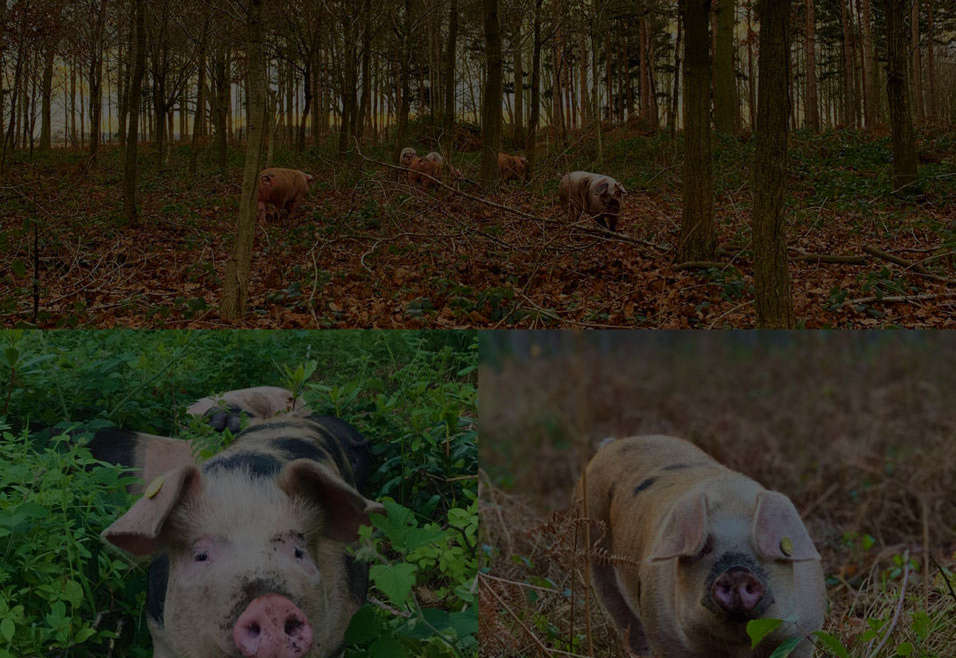 New Supplier – Woodland Reared Pork