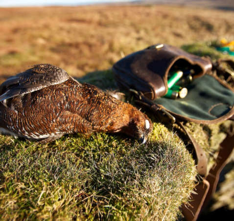 Grouse Moor to Kitchen Door in a matter of hours!!