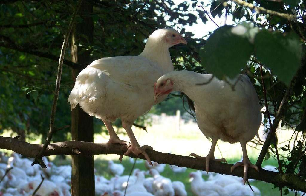 R&J Visit French Poultry Farms