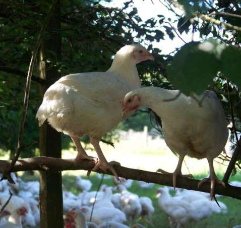 R&J Visit French Poultry Farms